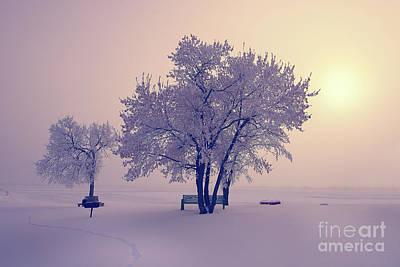 Winter Beauty  Print by Ian McGregor
