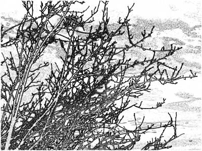 Winter Beckons Print by Will Borden