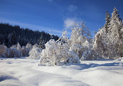 Pristine Photograph - Winter Blanket by Mike  Dawson