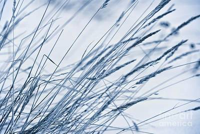 Snowy Digital Art - Winter Breeze by Priska Wettstein