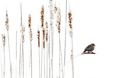 Photograph - Winter Came Suddenly by Andrea Kollo