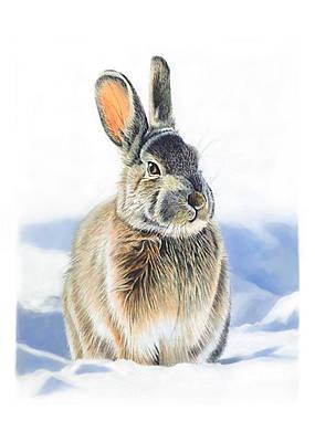 Bunny Mixed Media - Winter Coat by Bob Nolin