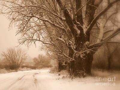 Snow Covered Trees Digital Art - Winter Dream by Carol Groenen
