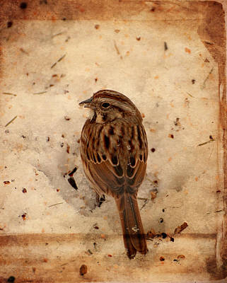 Sparrow Digital Art - Winter Feast I - Textured by Angie Tirado