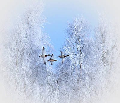 Winter Flight Of The Geese Print by Movie Poster Prints