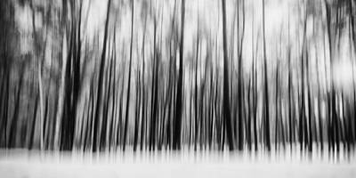 Photograph - Winter Forest by Thomas Richter