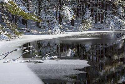 Winter Fresh Print by Karol Livote