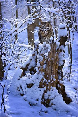 Winter Guest Print by Ron Jones