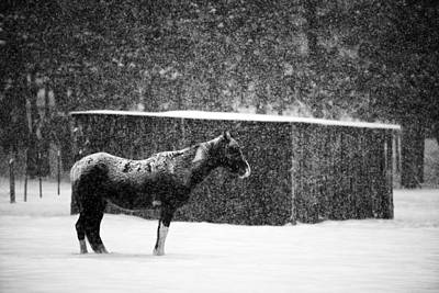 Winter Horse Shed Original by Mark Courage