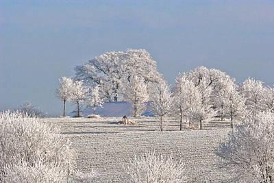 Phenomenon Photograph - Winter In Canada by Christine Till