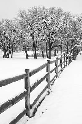 Winter Trees Photograph - Winter by Mike Irwin