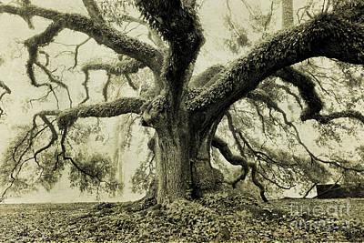 Winter Oak Print by Scott Pellegrin