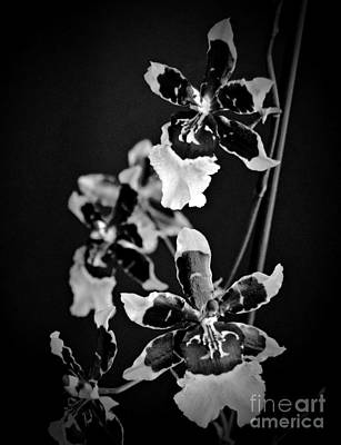 Winter Oncidium Orchid Monochrome Print by Chalet Roome-Rigdon