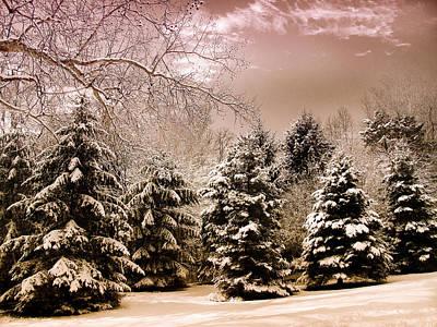 January Digital Art - Winter Pine by Jessica Jenney