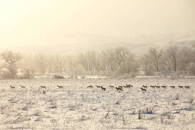 Pronghorn Photograph - Winter Playground by Todd Klassy
