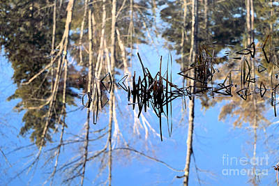 Spring Peepers Photograph - Winter Pond by Elizabeth Dow
