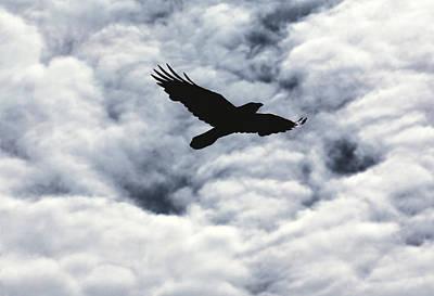 Photograph - Winter Raven by Daniel Furon