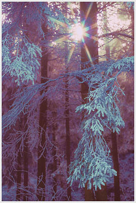 Sun Rays Digital Art - Winter Ray Of Hope by Antique Images