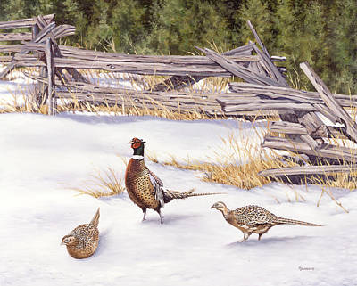 Bird Painting - Winter Ringed-necks by Richard De Wolfe