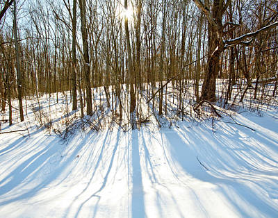 Winter Shadows Print by Tim Fitzwater