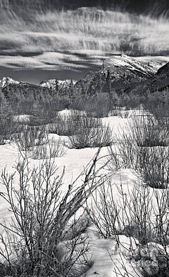 Dogwood Lake Photograph - Winter Spice In Monochrome by Royce Howland