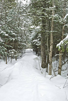 Mgp Photograph - Winter Trail 2200 by Michael Peychich