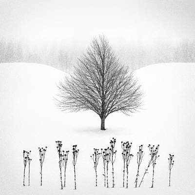 Oak Photograph - Winter Tree #13 by Matt Anderson