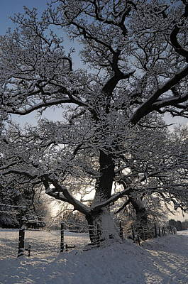 Photograph - Winter Tree In North Wales by Harry Robertson