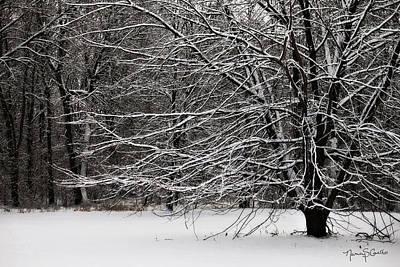 Winter Wonderland Print by Nancy  Coelho