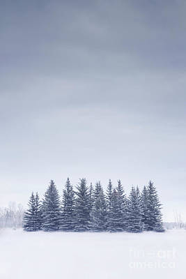 Calgary Photograph - Winterscape by Evelina Kremsdorf