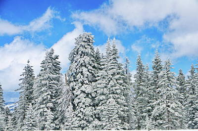 Snow Photograph - Winterscape by Jeff Kolker