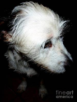 Photograph - Wire Hair Fox Terrier - 1 by Mary Deal