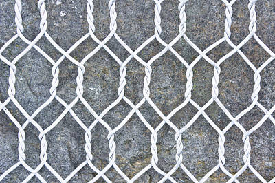 Wire-mesh Photograph - Wire Mesh by Tom Gowanlock