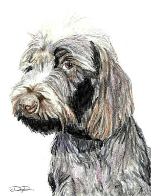 Griffon Drawing - Wirehaired Pointing Griffon Dog by Dan Pearce