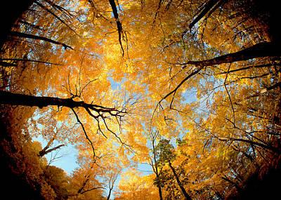 Wisconsin Canopy Print by Todd Klassy