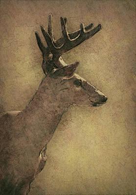 Wisconsin White Tail Buck Sketch Print by Jack Zulli