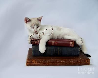 Kitten Photograph - Wisdom by Jai Johnson