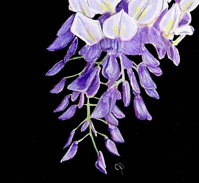 Watercolor Wisteria Painting - Wisteria by Carol Blackhurst