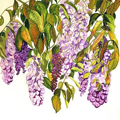 Watercolor Wisteria Painting - Wisteria by Mary O'Haver