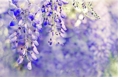 Soft Digital Art - Wisteria Watercolor by Jessica Jenney