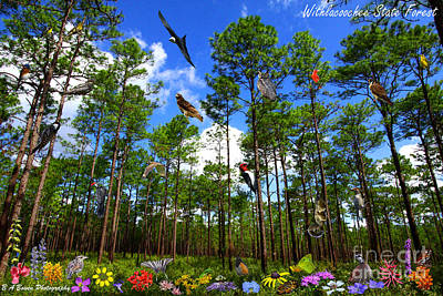 Withlacoochee State Forest Nature Collage Print by Barbara Bowen