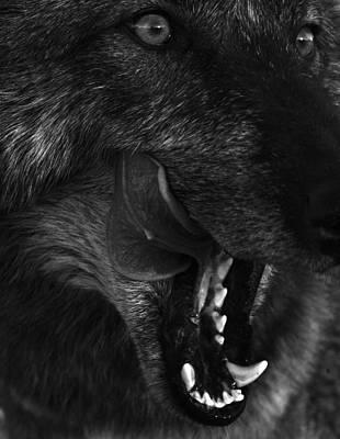Wolf Close Up Print by Dawn Kish