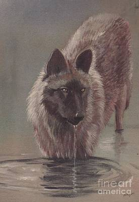 Wild Wolf Mixed Media - Wolf Drinking by Morgan Fitzsimons