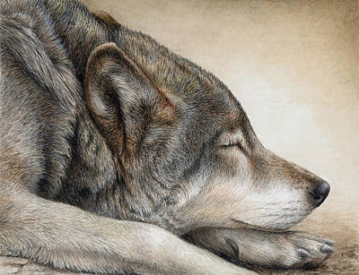 Wolf Watercolor Painting - Wolf Nap by Pat Erickson