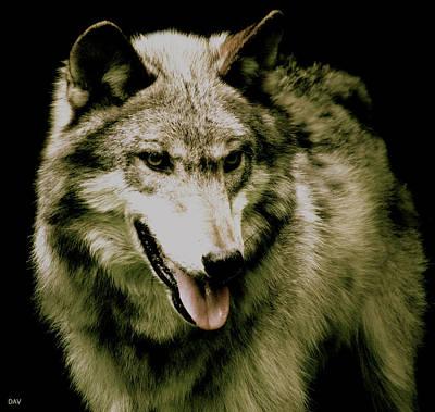 Wild Wolf Mixed Media - Wolf Of The Night by Debra     Vatalaro