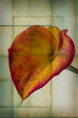 Wonderful Designs Photograph - Wonderful Calla Lily by Garry Gay