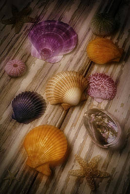 Wonderful Shell Still Life Print by Garry Gay