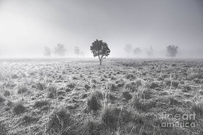 Country Scene Photograph - Wondrous Misty Background by Jorgo Photography - Wall Art Gallery