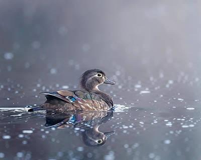 Wood Duck Hen Print by Bill Wakeley