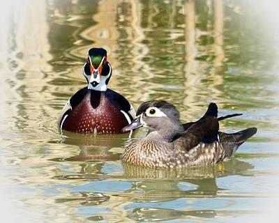 Loon Mixed Media - Wood Ducks by Laurie Winn Adams